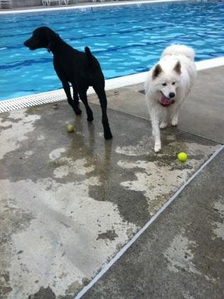 Sierra & Rocky