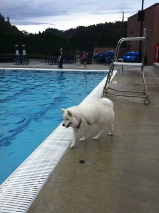 Ms Sierra checking out the deep end of the pool - Maybe next year Sierra