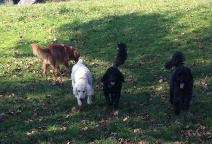 Lilo, Rocky & Duke