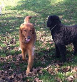 Duke & Benny