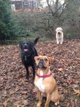 Oakley, Lilly & Maui