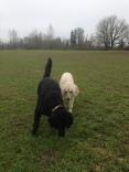 Rocky & Lilo