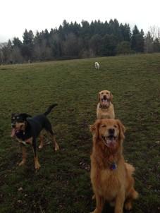 Max, Riley, Emmy & Apollo