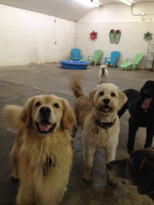 Mesa, Zoie, Benny & Apollo
