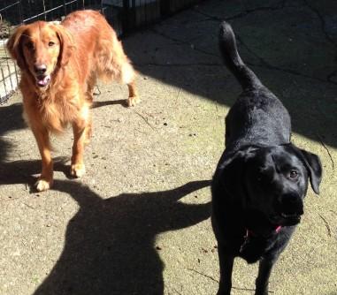 Duke & Lilly