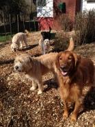 Duke, Buddy, Abby, Lilly & Zoie
