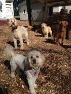 Abby, Zoie, Buddy & Duke