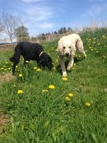 Lilo & Rocky