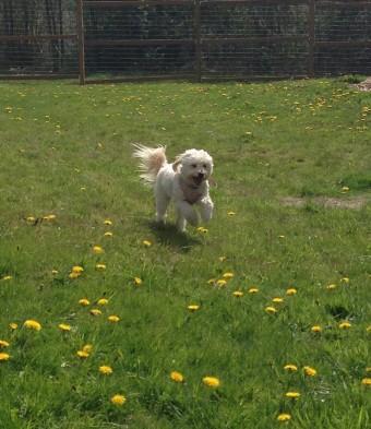 Run Abby Run!!