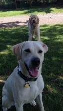 Buddy & Ms Zoie