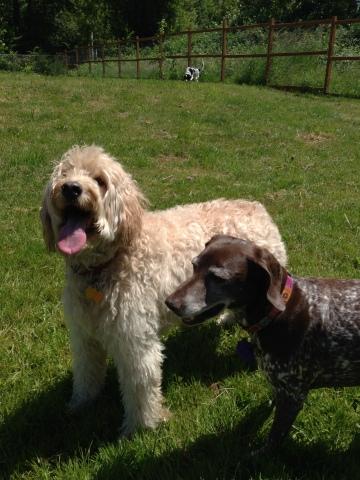 Zoie & Petey
