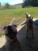 Ivy, Buddy & Whirly