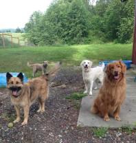 Murphy, Sam, Liza & Whirly