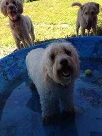 Ms Abby, Zoie & Ned