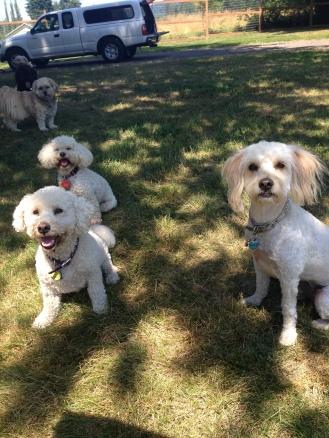 The Little Ones Teddy,Abby,Shree & Chika