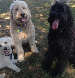 Teddy, Maui & Benny