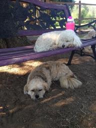 Nap Time Shree & Chika