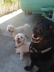 Chester hanging out with the little ones