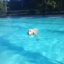 Ms Lilo hanging out in the deep end of the pool