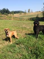Oakley & Benny