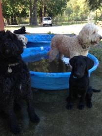 Benny, Harley, Abby & Maui
