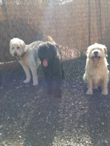 Maui, Benny & Buddy Sr
