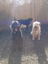 Benny, Buddy Sr & Ms Lilly