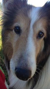 Ms Lassie