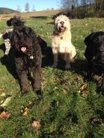 The Boys Benny, Bud & Harley