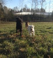 Oakley, Benny & Apollo