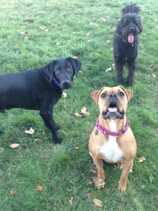 Oakley, Harley & Benny