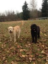 Buddy & Benny