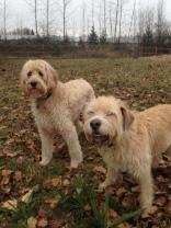 Buddy & Zoie