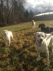 Buddy Jr, Liza & Zoie