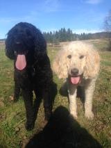 Rockey & Lilo