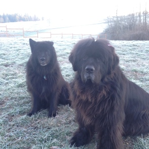 The Newfie's Maggy & Andy