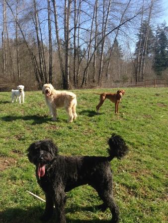Benny, Apollo, Zoie & Aria
