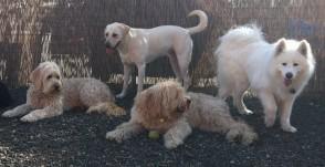 Time for a shade break Maui, Zoie, Bud Jr & Sierra