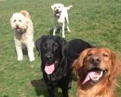 Duke, Harley, Maui & Bud Jr