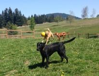Harley, Riley & Aria