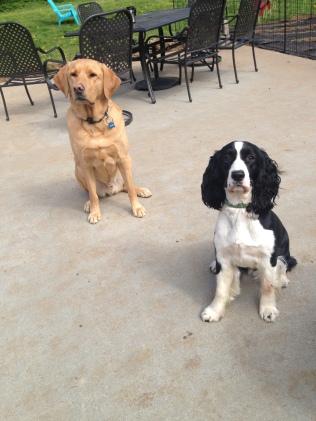 Riley & Ike