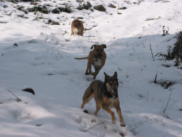 Snow Day 2005