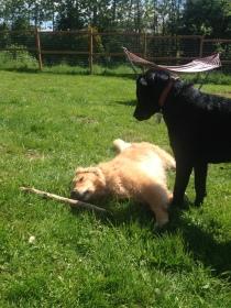 Ginger & Harley