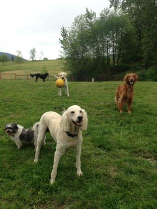 Lilo, Tag, Duke, Bud Jr, Rocky & Apollo