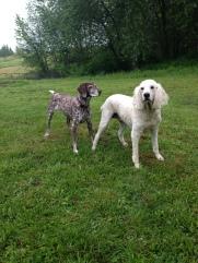 Petey & Lilo