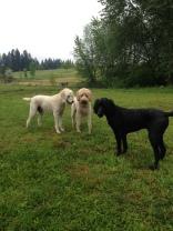 The Dood's Lilo, Zoie & Rockey