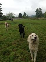 Zoie, Harley & Lilo
