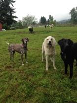 Petey, Lilo & Harley