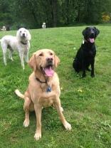 Riley, Harley & Lilo