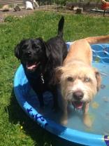 Buddy & Lilly